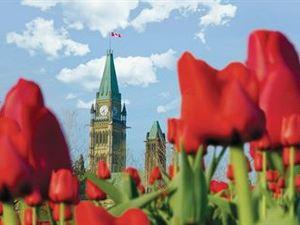 渥太華使館酒店及套房(Ottawa Embassy Hotel & Suites)