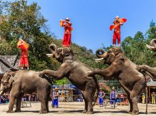 云南西双版纳+野象谷+普洱国家公园犀牛坪景区+告庄西双景4日3晚跟团游·亲密接触小动物,观看大象表演+百鸟园+蝴蝶园+是一次惊心动魂的探险活动