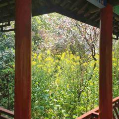 Nanhui Peach Blossom Village User Photo