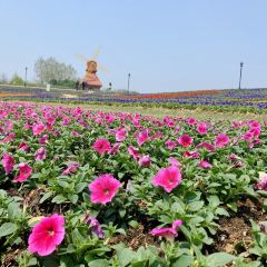 항저우만 해상꽃밭 여행 사진