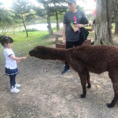スワンレイク動物基地のユーザー投稿写真