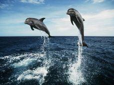 澳大利亚黄金海岸4日3晚跟团游(4钻)·【摩顿岛喂海豚】+赠考拉合照+全程四钻亚博体育app官网+可安排三人间+可加购接送机