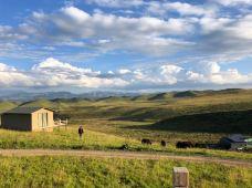 自然野奢·甘南解忧牧场3天2晚·季节限定款的野趣之旅