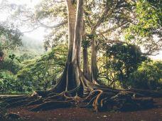美国夏威夷可爱岛3日跟团游·波普海滩公园邂逅绿海龟(有机会还可以看到座头鲸在岸边喷水)·号角喷泉·奇妙园林阿勒顿花园·两大古镇寻觅古老的历史·地质奇观威美亚峡谷·寇基州立公园探索大自然【品质小团】多人立减