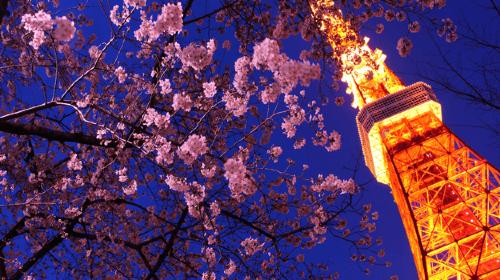 日本东京4日自由行·【樱花祭】粉雪时节 3晚市区连住 东京百选赏樱名所 见晴之丘#六本木下俯瞰天空之城| 国立新美-森林中的展览 吉卜力宫崎骏造梦时代 原宿表参道涩谷 潮流小众社区