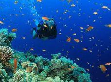 潜水·【OW或AOW潜水考证4天3晚】马来西亚美里米里·小众目的地·专业中文潜导·探索海底世界·自由活动可升级徒步热带雨林·文莱一日游