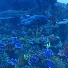 두바이 아쿠아리움과 수중 동물원 여행 사진