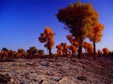 新疆南疆+库车+轮台+库尔勒+塔里木胡杨林公园+罗布人村寨3日2晚跟团游·克孜尔千佛洞   2人起订 精致小团