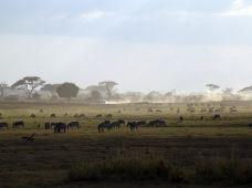 肯尼亚马赛马拉国家公园+纳库鲁+安博塞利国家公园+奈瓦沙7日6晚跟团游·动物大迁徙+火烈鸟+全程Safari游猎专用车+非洲风情升级酒店+自由星探索之旅