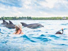 坦桑尼亚桑给巴尔4日3晚跟团游·游走异域波斯迷宫城 乘单叶帆船寻觅海豚踪迹