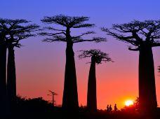 全球摄影·马达加斯加14天13晚跟团游摄影团(精致小团,深度摄影;被时间遗忘的孤岛,神奇动物在这里)【猴面包在树下的黄昏+萌动的狐猴+伊萨鲁国家地质公园+穆隆达瓦+安其拉贝】