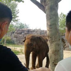 지난 야생동물원(제남 야생동물세계) 여행 사진