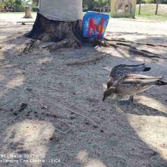 瑪璐考拉和動物公園用戶圖片