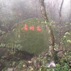 Qingyuan Jinzi Mountain Ecological Tourism Area User Photo