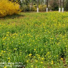 Jinan Botanical Garden User Photo