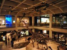 美国休斯敦+达拉斯+奥斯汀+圣安东尼奥+新奥尔良7日6晚跟团游·【恐龙之乡+白宫办公室体验之旅】