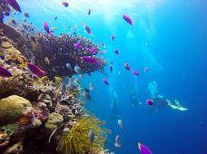 潜水·PADI潜水 菲律宾薄荷岛阿罗娜海滩联盟OW2日考证 中文教练五星潜店赠材料
