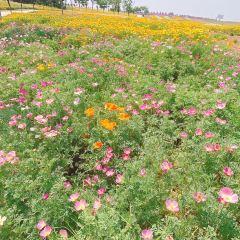 伏熱花海莊園用戶圖片