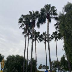 加利福尼亞樂高樂園用戶圖片