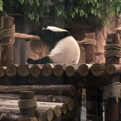 Quanzhou Wildlife Zoo (Quanzhou Wildlife World) User Photo