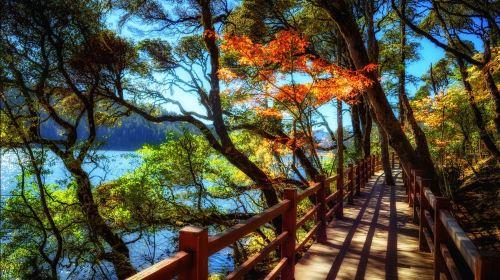 云南昆明+大理+双廊+丽江+香格里拉+西双版纳+玉龙雪山+版纳热带植物园+原始森林公园12日11晚跟团游·暑期纯玩旅行·至尊双飞·温泉·雪山·天然氧吧