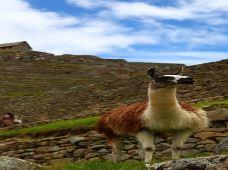 智利+秘鲁9日8晚私家团(4钻)·每周一、周五、周六,发团,全程4星beplay娱乐平台,专车专导,体验印加文化,瞭望天空之城马丘比丘,乘坐皮斯科小飞机观纳斯卡大地画;探秘世界肚脐复活节岛