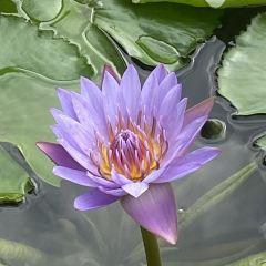 Hainan Tropical Botanical Garden User Photo