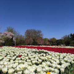 石家莊植物園用戶圖片