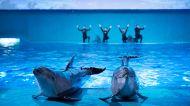 南昌万达文华酒店1-3晚+双人万达海洋乐园门票+双人早餐【文华单园游 海洋乐园】