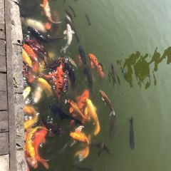 南湖ドリームランドのユーザー投稿写真