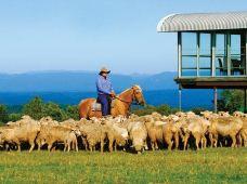 澳大利亚塔斯马尼亚2日1晚私家团·【东海岸深度2日游】【蜜月之选】+近距离企鹅探寻之旅+纯净白沙滩+可安排三人间