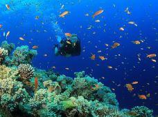 潜水·【印度尼西亚·美娜多】OW考证3天2晚·专业教练教学·探索海洋之旅·1人起订·可免费定制当地旅游行程