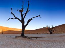 纳米比亚5日4晚跟团游·--漫步红沙漠--索苏维来+-鲸鱼湾出海--斯瓦科普蒙德