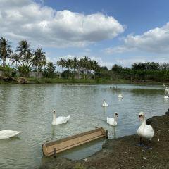 Swan Lake Animal Base User Photo