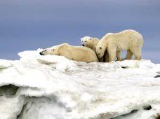 挪威斯沃尔韦尔+罗弗敦群岛+斯沃尔韦尔+亨宁斯韦尔+雷讷9日半自助游·【自驾仙境罗弗敦·赠送定制驾驶路书】+【北极·斯瓦尔巴·寻找北极熊·新玩法】极地自在游 ,一次出行,双重体验【只选对的】