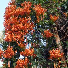 Tropical Flower Garden User Photo
