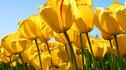 【春天走进欧洲·郁金香花季】阿玛河轮轻松畅游荷兰比利时9天7晚·豪华露台房+库肯霍夫花园+有机会参观布鲁塞尔花展+自行车骑行欧洲小镇+世界遗产风车村庄+全程中文陪同