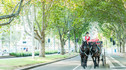【皇室驾到·澳世无双】澳大利亚奢享体验12天10晚·皇室同游探索艾尔斯岩+土著文化国礼体验+直升机帆船双向饱览大堡礁+私人海滩骑马体验+马车感受澳洲传承