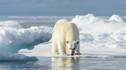 【至极视野·至尊享受】银海邮轮冰岛格陵兰岛加拿大挪威峡湾巡游40天39晚·斯瓦尔巴群岛+乘坐橡皮艇冰川峡湾巡游+寻找极地稀有野生动物+北极熊王国