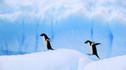 【轻奢南极·最后2席】奢华银海邮轮南极半岛15天11晚·豪华阳台套房+专属管家服务+稀缺限量席位+阿根廷探索之旅