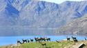 【做一周新西兰人】新西兰南北岛9天6晚深度体验游·私人牧场农场主体验+冰川徒步追寻Kiwi精神+回归千年毛利生活+最in周末海滩BBQ+扬帆远航