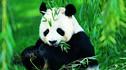 【天府之国·深度精选】成都+乐山4天3晚·行政套房+熊猫基地+三星堆+川剧VIP席位+川菜制作体验