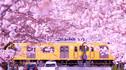 【樱时美汤·春时之约】日本东京+箱根+富士山赏樱5天4晚·醉美夜樱祭+罗莱夏朵&米其林三星+甄选丽思东京塔景观客房+私享温泉&湖光樱色&樱景富士山+花路穿行
