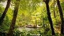 【初夏轻体·焕然一新】巴厘岛康体6天4晚·乌布COMO香巴拉庄园+清体排毒疗程+全程中文导游