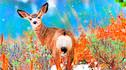 【安缦甄选·探索发现】美国黄石国家公园9天7晚·苍穹之外 安缦伽尼度假村《私人露台套房》+冬季黄石国家公园+飞跃大提顿峰+雪地车野生动物之旅+雪地摩托+国家麋鹿保护区+洛杉矶