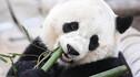 【川西藏寨·雪山温泉】成都+卧龙熊猫苑+毕棚沟5天4晚·亲密接触大熊猫+古尔沟温泉+探秘毕棚沟+甘堡藏寨+川西藏式火锅