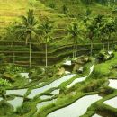 Bali Shore Excursion : Customize Private Full day Tour From Benoa Port