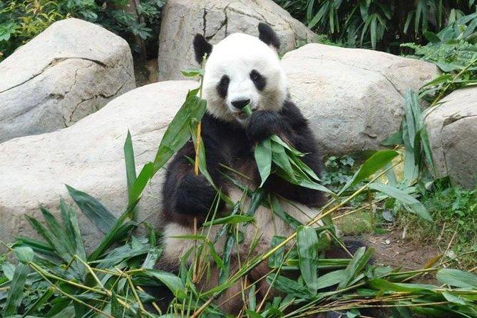 Private Day Tour: Chengdu Panda Breeding Base and Sanxingdui Museum