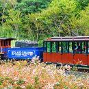 Ecoland Forest Train Ticket