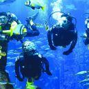Dubai Atlantis Discover Scuba Dive